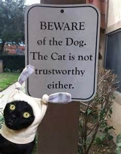 beware%20the%20dog.jpg