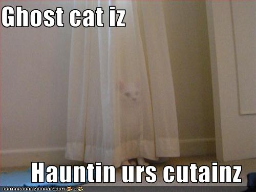 funny-pictures-a-ghost-cat-is-haunting-your-curtains.jpg